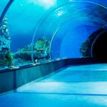 Den Blå Planet (Danmarks Akvarium) kan du opleve dyr som lever under eller i vand. Det er en god oplevelse for hele familien.