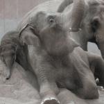 I København Zoo kan du bl.a. se på elefanter