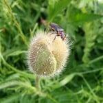 bille-paa-blomst