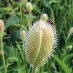 bille-paa-blomst-2