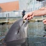 Fjord & Bælt er en turistattraktion, hvor du bl.a. kan se marsvin, sæler og få lov til at røre ved fisk og planter i deres akvarier.