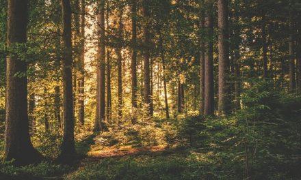 4 sjove ting du kan lave i en skov