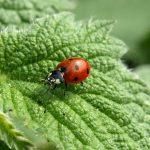 Tag på insektjagt med børnene